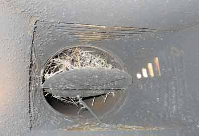 Birds nest in chimney